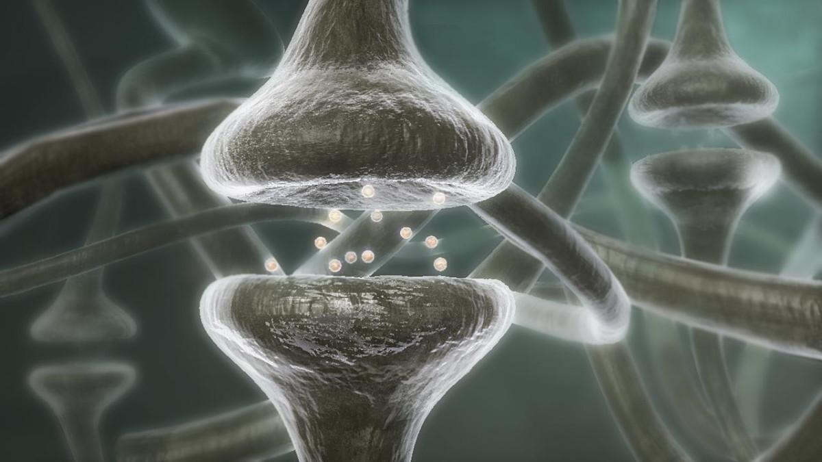 Neurocognição e Aprendizagem: tema da Pós-Graduação com inscrição aberta na Faculdade IENH